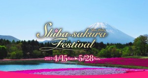 A good one for the weekend- Fuji Shibazakura Matsuri